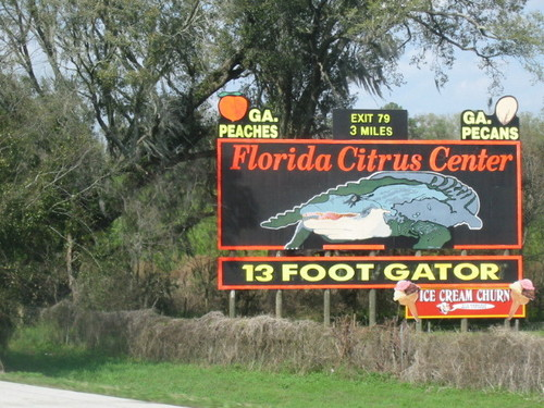 florida_citrus_center_13_foot_gator.jpg