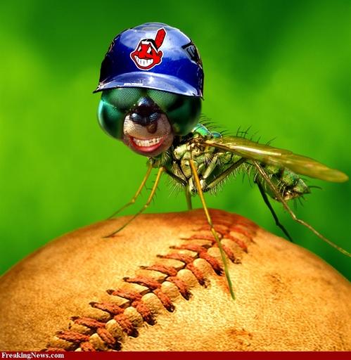 Baseball-Bug-32644.jpg